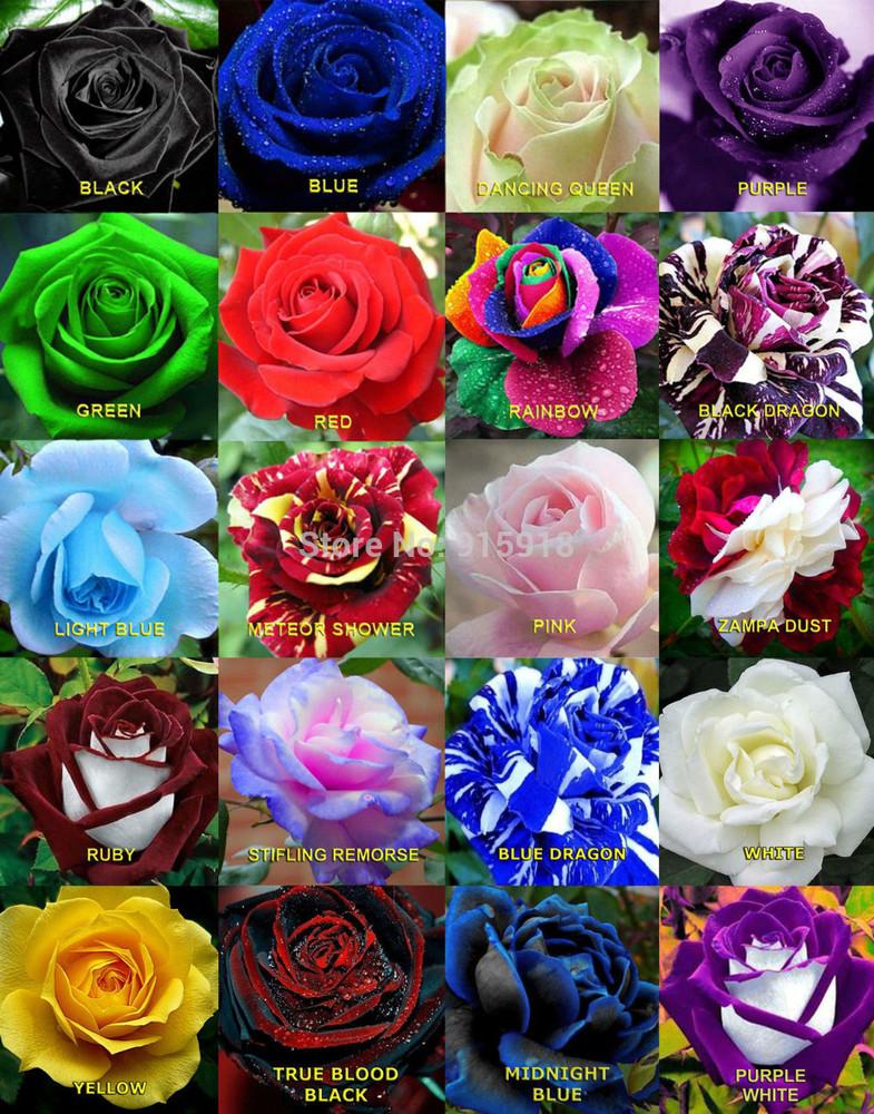 Розы названия и в картинках