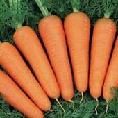 Морковь Аленка ранняя
