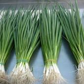 Лук на зелень из семян 100шт