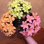 Цветок крокус бордюр. Высота 21 см.