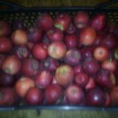 Сортовые яблоки со своего сада. Лот 5кг. Сочные и очень вкусные. Без химии!