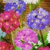 """Примула """" Весенний букет"""". Многолетний весенний первоцвет! Можно выращивать в комнате!!!До 2025"""