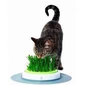 """Семена зелени для кошки """" Мурка"""" или для собаки """"Лесси"""".Для здоровья вашего любимчика."""