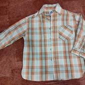 Palomino 104р, рубашка на плотного небенка