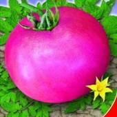 Семена помидора Божественный. Очень вкусный!