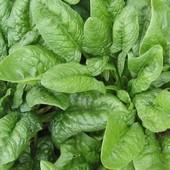 Семена шпината Матадор. Можно на улице и в доме. Содержит много железа!!!