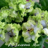 Зеленый мох- вкорінений листочок