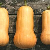 Семена тыквы сладкой. Лот 20 семян