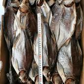 Рыба лот 1 кг вял синец, плотва, густера