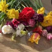 Тюльпаны в лоте 10 луковиц