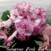 Tomorrow's Pink Ice - гарна дітка