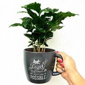 Кофе Арабика.Семена 1 г.